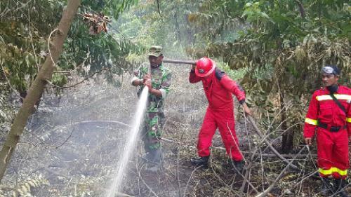 Musim Kemarau Tiba, Kebakaran Lahan Mulai Terjadi di Pelalawan