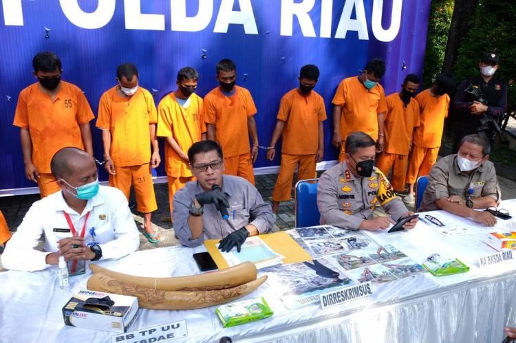 Polda Riau Amankan Tiga Pelaku Sindikat Perdagangan Gading Gajah